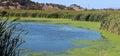 Marsh Ponds in San Rafael, California Royalty Free Stock Photo