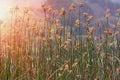 Marsh reeds Royalty Free Stock Photo