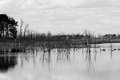 Marsh reflections a black and white image of with water Stock Photo