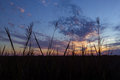Marsh Sunset Royalty Free Stock Photo