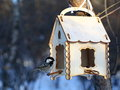 Marsh tit feeding in winter sitting feeder house Royalty Free Stock Images