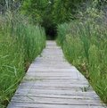 Marshland Boardwalk Royalty Free Stock Image
