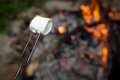 Marshmallow on a stick being roasted over a fire Royalty Free Stock Photo