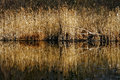 Marshy abstract in the north autumn lake and marsh moor of italy Stock Photos