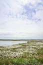 Marshy landscape vintage flowery north moorland in the spring Stock Photo