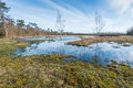 Marshy Nature Area In Belgium