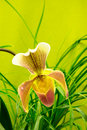 Marsupial beautiful orchid on a bright green background and leaves pattern Stock Photo