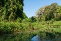 Martha brae wilderness along the river falmouth jamaica Royalty Free Stock Photo