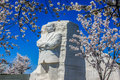Martin luther king jr memorial and cherry blossoms in spring monument stands proudly against a deep blue cloudless sky is framed Royalty Free Stock Images