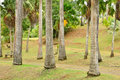 Martinique picturesque habitation clement in le francois in we the park of west indies Stock Image