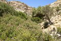 Martsalo gorge on crete oasis with palm trees in the canyon in the south of there is also a cave church in the Royalty Free Stock Photos