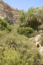 Martsalo gorge on crete oasis with palm trees in the canyon in the south of there is also a cave church in the Royalty Free Stock Images