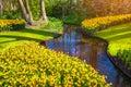 Marvellous yellow narcissus in the keukenhof park beautiful outdoor scenery netherlands europe Stock Image