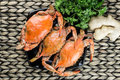 Maryland blue crabs. Steamed crabs. Crab fest. Royalty Free Stock Photo