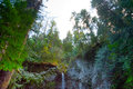 Marymere Falls Royalty Free Stock Photo