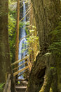 Marymere Falls and Trail Royalty Free Stock Photo