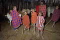 Masai village life, group portrait young herdsmen Royalty Free Stock Photo