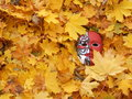 Mask venetian in autum leaf s Royalty Free Stock Images