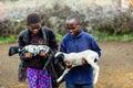 Massai Children Carrying Goats...