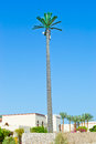 Mast cellular tower designed as a large palm trees on the background of blue sky Stock Images
