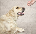 Master wanting to greet with friendly dog Stock Images