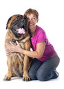 Mastiff and woman female in front of white background Royalty Free Stock Photography
