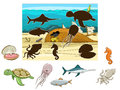 Match the animals and fish to their shadows Royalty Free Stock Photo