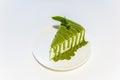 Matcha green tea sponge cake Royalty Free Stock Photo