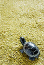 Mate tea background turtle close up selective focus Royalty Free Stock Images