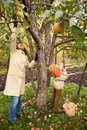 Mather and son gather apples in autumnal garden Royalty Free Stock Photo