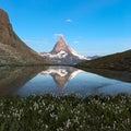 Matterhorn reflecton in Riffelsee with flowers, Zermatt, Alps, S Royalty Free Stock Photo