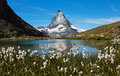 Matterhorn At Riffelsee Framed By Flowers Stock Photography