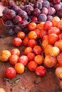 Mature fruits with natural wax bloom hq photo of multicolored plums Royalty Free Stock Photography