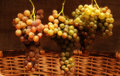 Mature grapes three bunches of ripe in basket Royalty Free Stock Images