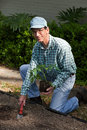 Mature Man Working in The Garden Stock Photography