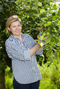 Mature woman check apple trees in her orchard Royalty Free Stock Photo