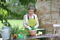 Mature woman gardening on sunny day senior preparing aromatic herbs in pot Stock Photography
