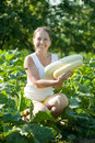 Mature woman is picking vegetable marrow in plant Royalty Free Stock Photo