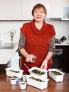 Mature woman watering seedlings at home kitchen Stock Image