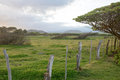 Maui pasture green on island of with fence trees clouds and mountains in the background Stock Photo