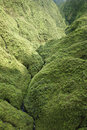 Maui Rainforest. Stock Images