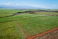 Maui sugar cane fields at norther hawaii aerial view Stock Photo