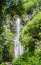 Maui waterfall with lush tropical vegetation Royalty Free Stock Image
