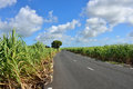 Mauritius island empty road among sugarcane plantation Royalty Free Stock Photos