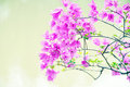 Mauve  bougainvillea flowers Royalty Free Stock Photography