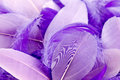 Mauve feathers abstract background of soft colored Stock Photos