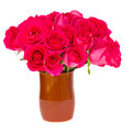 Mauve fresh roses in pot isolated on white background Royalty Free Stock Images