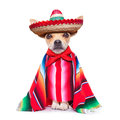 Maxican chihuahua fun mariachi mexican dog wearing a sombrero hat and red poncho isolated on white background Stock Image