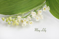 May lilly lily of the valley Royalty Free Stock Photo
