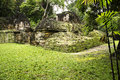 Mayan ruins in the forest national park of tikal and some popping out from Royalty Free Stock Photography